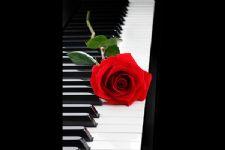 Música para Casamento BH - D' Claretto 5